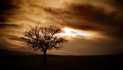 (Okan AKGL) Tags: sunset sky cloud plant tree clouds sony serene alpha aa a58 flickrturkey alpha58