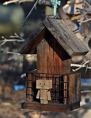 Beyond The Bird Balcony (Happy Autumn Everyone!!!) Tags: wood morning light outside back beyond odc danbo zimny birdfeederin yardtreesbokehtuesdayjo