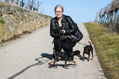 Ein Spaziergang in den Weinbergen - AbsolutHund.at (pao.photo) Tags: winter blog feld hund coco sonne weinberg pollux 2016 gumpoldskirchen jnner absoluthund