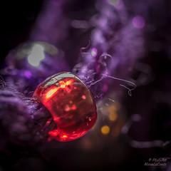 Bead Detail (PhotoArtMarie) Tags: orange macro purple yarn bead