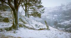 Glen Nevis (Roksoff) Tags: trees winter snow cold ice hail pine scotland log wind bennevis fortwilliam lochaber scottishhighlands glennevis scotspine leefilters rivernevis nikond810 1635mmf4 steallgorge