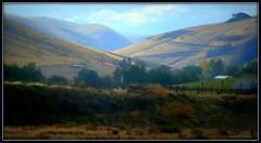 Dry hill farmland (edenseekr) Tags: farmland washingtonstate arid photopainting digitallypainted