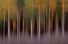 Wealdenblur (Alan MacKenzie) Tags: trees winter sunset blur nature forest woodland sussex pan