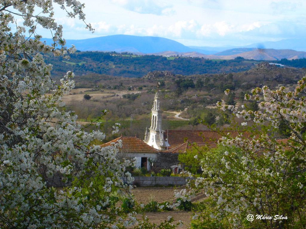 Águas Frias (Chaves) - ... a torre da igreja  ... por entre as árvores floridas ...