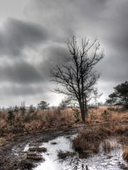 Nationaal Park De Groote Peel   --HDR-- (Frank Berbers) Tags: netherlands landscape nederland peat moor paysage landschaft paysbas hdr highdynamicrange turf landschap niederlande noordbrabant torf tourbire tourbe veengrond nationaalparkdegrootepeel nationalparkdegrootepeel degrootepeelnationalpark imageriegrandegammedynamique nikoncoolpixp610 parcnationaldegrootepeel
