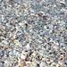 Mollusc shells on marine beach (Bowman's Beach, Sanibel Island, Florida, USA) 1