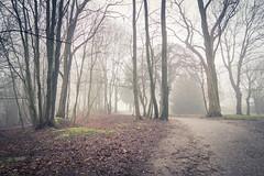 Mystrieuse et brumeuse (Gilderic Photography) Tags: park trees mist fog canon woods belgium belgique belgie chartreuse arbres liege parc mystre g7x gilderic