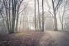 Mystérieuse et brumeuse (Gilderic Photography) Tags: park trees mist fog canon woods belgium belgique belgie chartreuse arbres liege parc mystère g7x gilderic