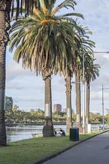 Palm Trees (Sarah L. Donovan) Tags: melbourne bracketing exercise5 worldaroundus cityofmelb