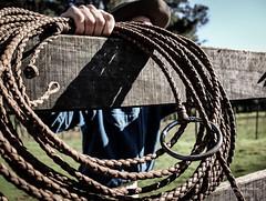 'Velho traste gacho..' (Suzana Fernandes Fotografia) Tags: horse rural lazo country campo cavalo pampa gaucho rodeio lao gacho laador campereada pealo