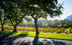 groot constantia35 (WITHIN the FRAME Photography(4 Million views tha) Tags: road trees sunlight tourism landscape fuji shadows wide capetown vineyards goldenhour grootconstantia xt1