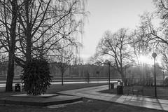 A Stroll in Black & White (Ryuu Tora) Tags: park winter sunset bw cold ice backlight canon river is blackwhite vinter frost sweden path lv karlstad klarlven sverige parkbench klara vg solnedgng vrmland svartvitt motljus 70d parkbnk kallt ef24105mmf4lisusm ryuutora