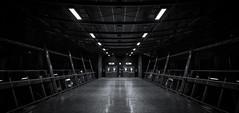 Escape (Nick.Richards) Tags: blackandwhite london monochrome mono nikon moody escape tube nickrichards londonunderground lightroom northgreenwich blancetnoir d7100 nikon1685 nikond7100