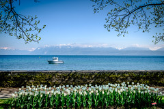 0444-morges boot (Theo Olfers) Tags: lake alps alpes landscape schweiz switzerland boat meer suisse tulips geneve lac alpen leman 27 ch tulpen vaud morges zwitserland xf romandie waadt