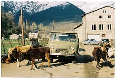 (tayn3) Tags: travel snow mountains film analog truck 35mm georgia asia cows kodak olympus ishootfilm 400 soviet caucasus silkroad analogue russian oldtruck centralasia olympusom2 exsoviet olympusom2n svaneti mestia ultramax400 filmlife traveldeeper