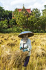 ChiangRai_2193 (JCS75) Tags: woman canon thailand asia farmer ricefields peasant chiangrai