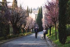 Spring Walk (Marta Marcato) Tags: street old pink flowers dog love primavera cane donna spring couple strada path walk rosa oldman uomo oldlady fiori sentiero amore coppia vecchio passeggiata nikond7200