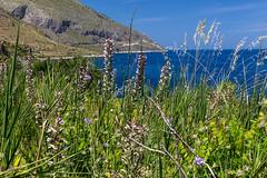 Vegetazione alla Riserva dello Zingaro (Sherpa1963) Tags: mare natura sicily fiori sicilia trapani sanvitolocapo vegetazione scopello riservanaturaleorientatadellozingaro