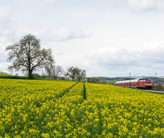 146 213 DB Regio (Daniel Powalka) Tags: panorama tree train germany landscape deutschland photography photo nikon flickr track foto fotograf fotografie photographer photographie photos natur award himmel wolken eisenbahn rail railway zug loco db fotos nikkor landschaft railways raps localtrain trainspotting spotting wetter railroads artland landschaften acker lokomotive schiene regio trainspotter autofocus traxx strecke regionalexpress nahverkehr rapsfeld objektiv lokomotiven fahrgste elok nikon18200 fahrgast flickrsbest lokfhrer flickrcenter d7100 flickraward flickrphotoaward flickrawardgroup goldstaraward photonawards goldstarflickraward awardflickrbest nikonflickraward flickrtravelaward nikond7100 flickrclickx flickrphotosperfect