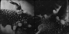 Sprout-4945 (Poetic Medium) Tags: blackandwhite stilllife food macro diptych ipod potato produce organic mextures kitcamghostbird