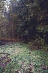 IMG_3468 (ZoRRaW photography) Tags: mist tree fog forest spring luxembourg neuhausgen