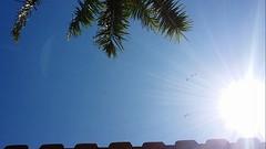 A Natureza marcando presena em vrios elementos!  //  Nature being present in several elements! (J. Garcia Dias) Tags: sky tree verde green bird planta folhas sol branco azul arbol ar cu palm nuvens rvore pssaros amanhecer telhado outono vento flay coqueiro arara brilho vo palmeira