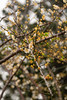 _DSC2009 (eblis37) Tags: nikon tamron plumflower 白梅 a005 d7100 t70300