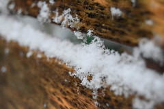 Snowflakes (explored) (emmajanerigby) Tags: winter snow ice outdoors photography nikon depthoffield d3300