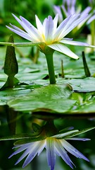 Nature's composition (semsia_qtr) Tags: green nature water garden lilies oxford botanic refrelction