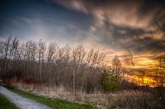 Welcome to the jungle (Sean Liu - preparing for next trip) Tags: longexposure sunset ontario woods markham nikond7000