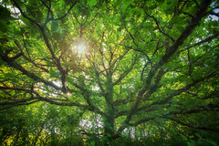 A story about the voice in my head (Sophie Luciani) Tags: trees light sun tree hope sophie luciani