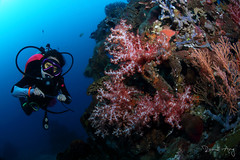 Red (Randi Ang) Tags: bali coral canon indonesia photography eos soft underwater angle wide dive scuba diving fisheye ang 15mm randi 6d amed