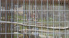 reflection. april 2016 (timp37) Tags: park reflection me fence zoo us illinois phillips nat nathalie aurora april 2016