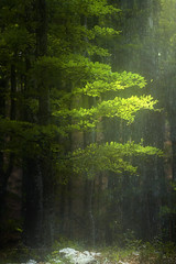 TEARS OF WINTER (Titanium007) Tags: light green nature rain vertical forest spring natural oxygen slovenia greenery slovenija sustainable sustainability greenenergy greenpower trnovo greennature trnovskigozd