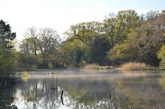 An Oasis in the City (hapsnaps) Tags: trees mist lake water reflections reeds spring hampshire southampton southamptoncommon 2016 fishinglake naturethroughthelens hapsnaps