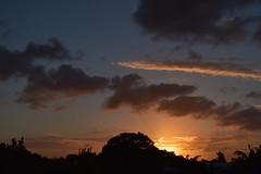 Nikon sunset (Images by Jeff - from the sea) Tags: blue trees sunset sky storm clouds gold twilight nikon dusk australia bluesky palmtrees april nikkor goldensunset bundaberg d5500 18140mm nikkor18140mm