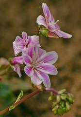 Spring 2016 - 873 LBG (Lostash) Tags: life flowers plants nature spring flora seasons leicesterbotanicalgardens