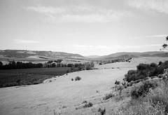 Valley (Kent Holloway) Tags: au australia tasmania leicam6 fujiacros100 rosegarland summicron35mm