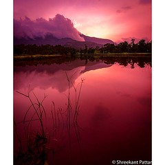 Glorious #Sunset Paddy fields in #Bhandardara#westernghatsofindia... (Shreekant Pattar) Tags: pictures sunset nikon exploring like images follow glorious photographs adventures capture share comment iphone photooftheday clicking picoftheday happyhours bhandardara nearmumbai hashtags likeforlike followback instagram westernghatsofindia instadaily instagood instamood instafollow tagforlikes uploaded:by=flickstagram instagram:photo=10392466156365638452032690724 instagram:venuename=bhandardhara28nashik29 instagram:venue=270539076