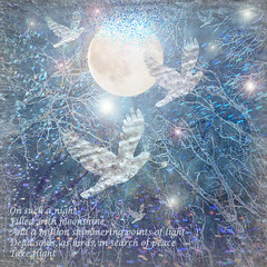 On Such A Night .. (virtually_supine popping in and out) Tags: blue light moon birds collage night photomanipulation silver bright text creative textures montage layers sparkling verse digitalartwork frostytrees photoshopelements9 tmidecember2015contestmagicalandexceptionalnights