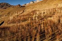 A Colorful Autumn in Drass, Kashmir (Anoop Negi) Tags: world autumn winter red brown india colors photography golden photo war shadows place hues kashmir anoop zone ladakh negi coldest drass ezee123 dras
