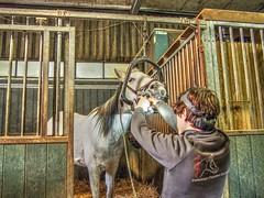 P1290109 (gill4kleuren - 11 ml views) Tags: sarah bezoek dentist haflinger tandarts arabier saampjes