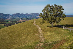 Caminos (SantiMB.Photos) Tags: espaa tree landscape meadow paisaje caminos rbol otoo paths prado ways esp navarra baztn 2tumblr telleria 2blogger vacaciones2015