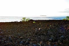 mystery prism (heartinhawaii) Tags: ocean sunset sea seascape hawaii lava evening coast mar seaside pacific shoreline maui shore kai lensflare greenplants magichour weirdlighting lavafield 808 lavarocks youngplants lightrefraction ahihicove southmaui nikond3300 heartinhawaii mauiinnovember ahihinaturereserve molokinisilhouette mysteryprism plantsinlavafield