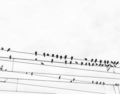 Gn notalar (dilekbal0922) Tags: sky white black up look birds turkey melody eminonu tramwayline