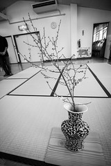 Green Tea Ceremony (YWAM Japan Team) Tags: life love japan kids god ministry jesus ceremony christian missionary chiba ywam greentea fellowship outreach holyspirit katsuura ywamorlando ywamjapan kashhimadakindergarten