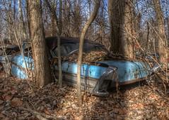 DSC08570.ARW-01 (juice95m3) Tags: abandoned rust vintagecar automobile junkyard oldcars classiccars