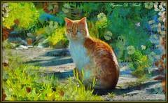 Il gatto - Gennaio-2016 (agostinodascoli) Tags: art nature nikon colore digitalart digitalpainting fiori nikkor piante gatto sicilia photopainting fullcolor cianciana