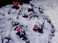 Snow 004 (NikWatt) Tags: snow nikon great scots greatphotographers edinburghphotographers nikwatt nikonccoolpix