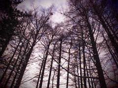 P1240605 (mina_371001) Tags: winter sky tree evening sapporo hokkaido    maruyamapark foest   amazingworld photographywork olympusomdem10